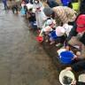 サケの稚魚放流体験会